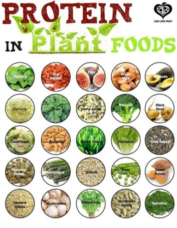 Protein in Plant Foods